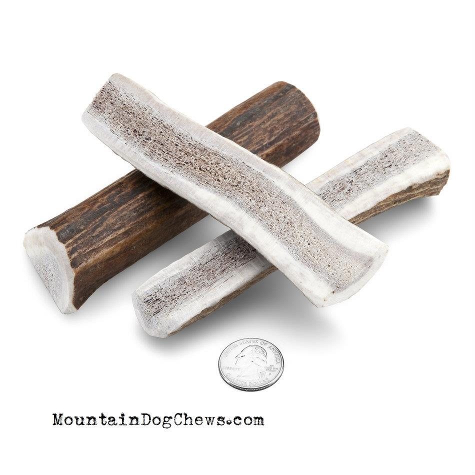 Small Center Cut Elk Antler for Dogs 5 to 35 pounds